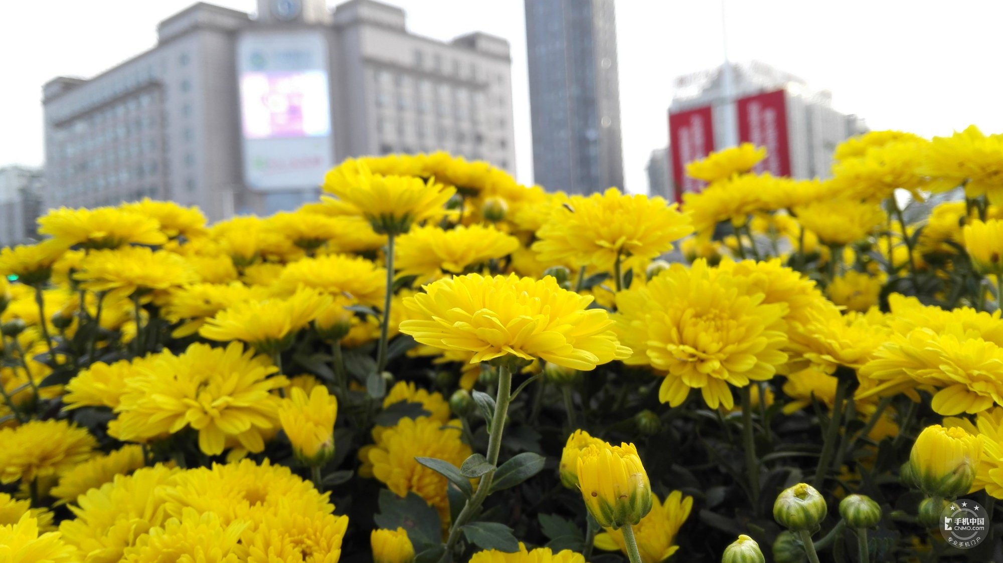 荣耀6(移动4G/16GB)手机拍照出来的影像图第5张